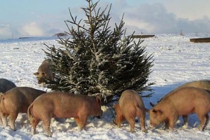 juletraes-grise-stor.jpg