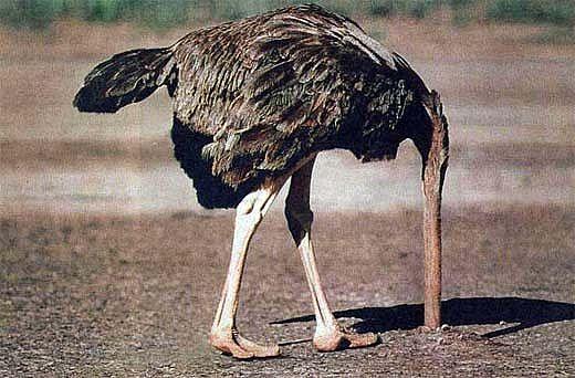 ostrich_head_in_ground_full.jpg