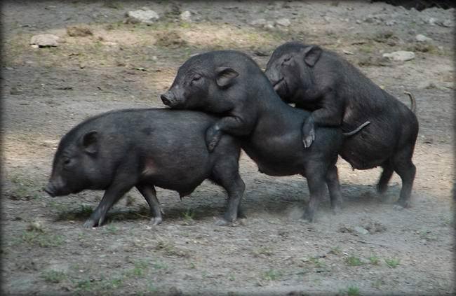polygami.jpg