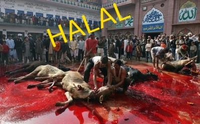 halal_23