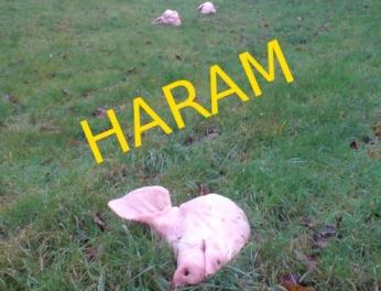haram_22
