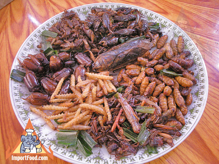 insect_plate_l