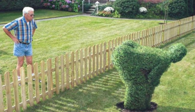 kan ikke lide nabo